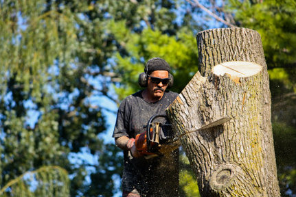 Tree Services in Arvada